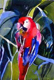 Scarlet-Macaw-175